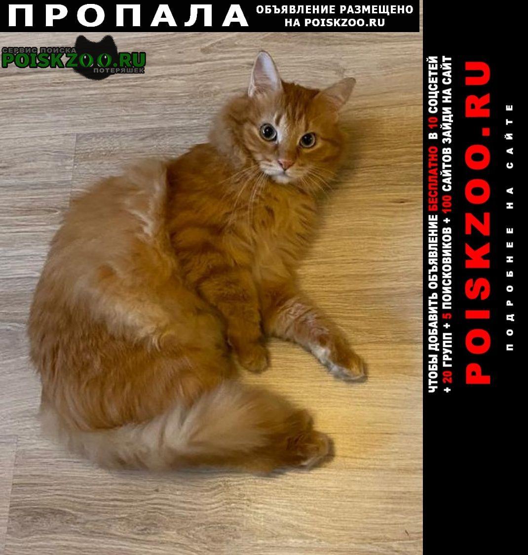 Пропала кошка рыжий кот в измайлово Москва