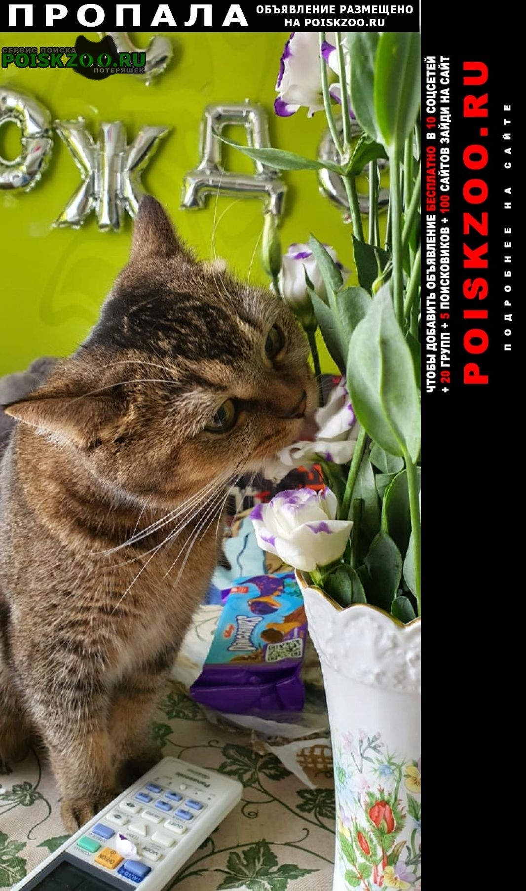 Пропала кошка военвед сити Ростов-на-Дону