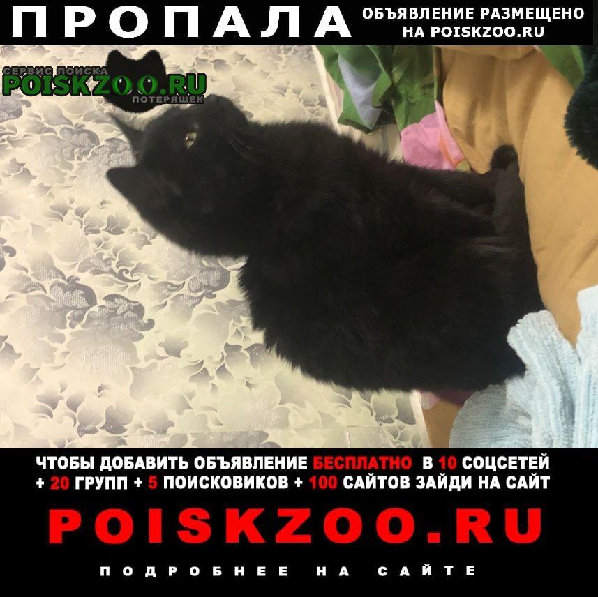 Пропала кошка вознаграждение Красноярск