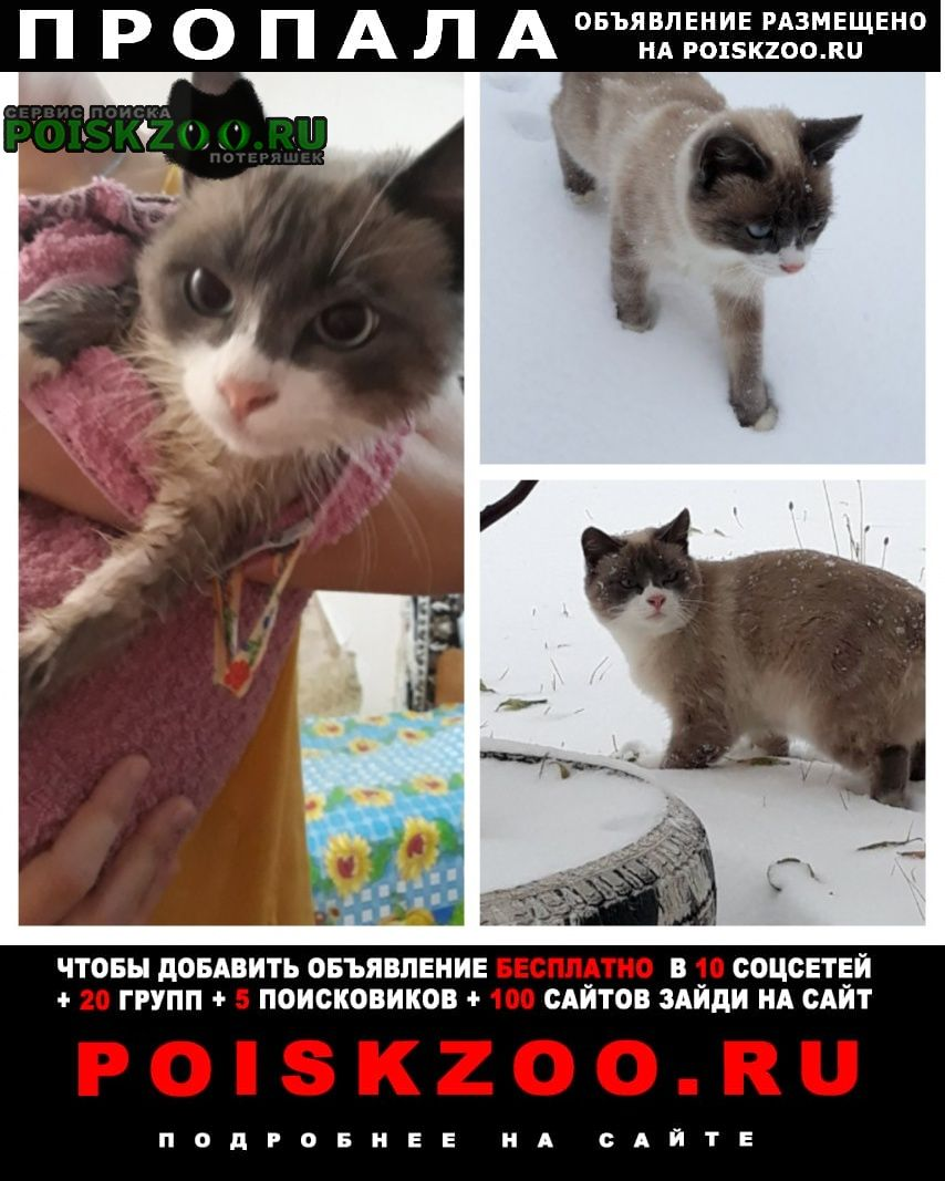 Пропала кошка Новошахтинск