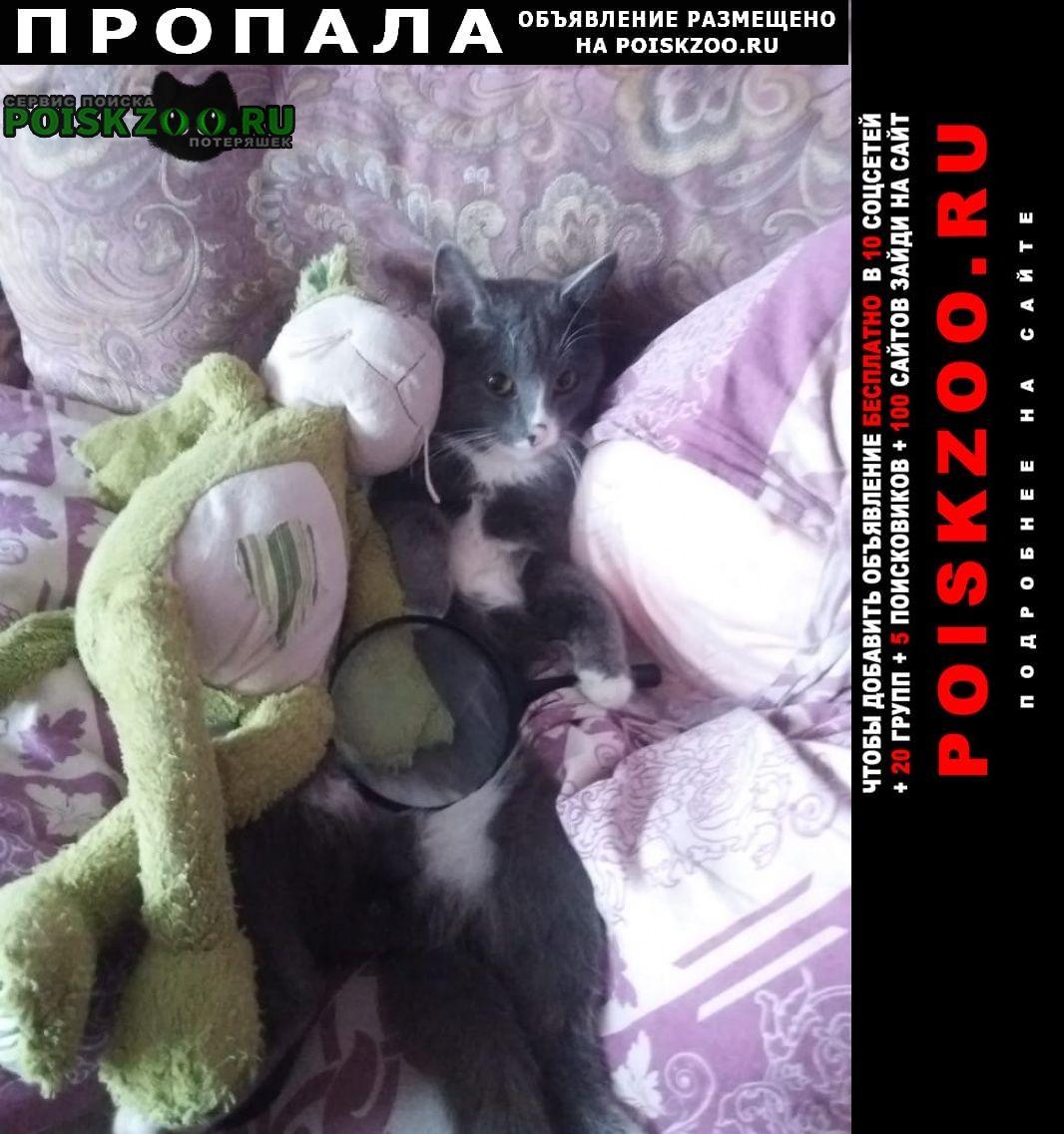 Пропала кошка кот. Омск