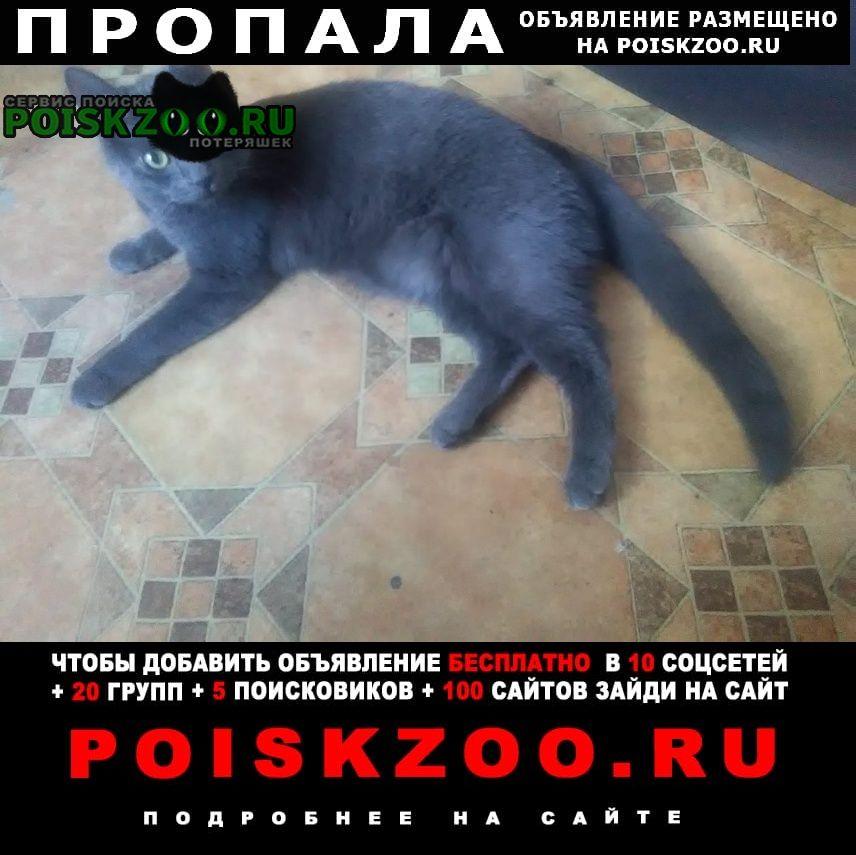 Пропала кошка по адресу 1-я останкинская Москва