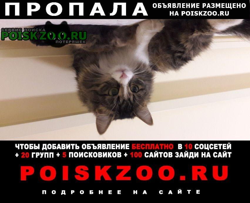 Пропала кошка помогите найти Октябрьский (Московская обл.)