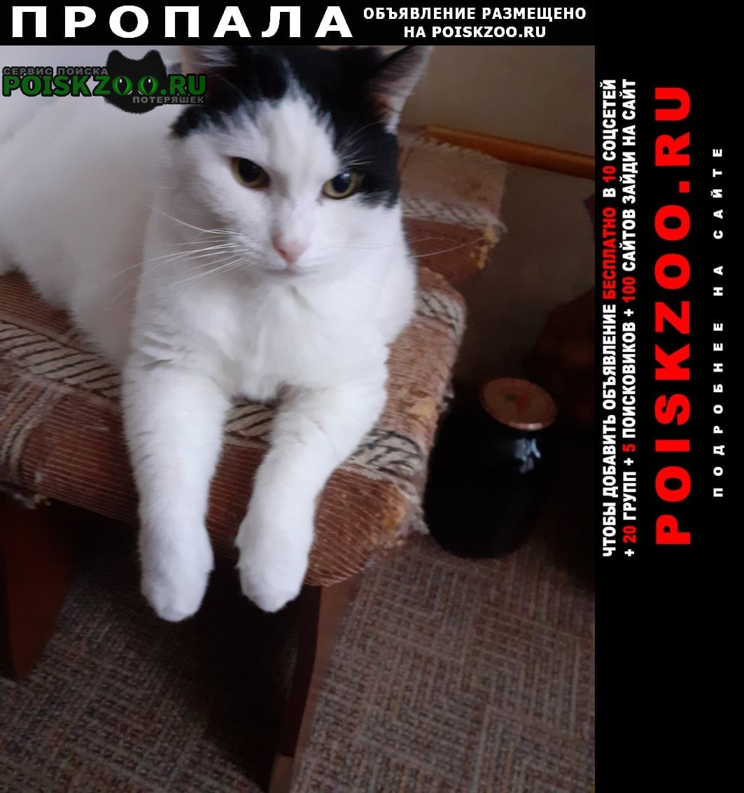 Пропал кот Ярославль