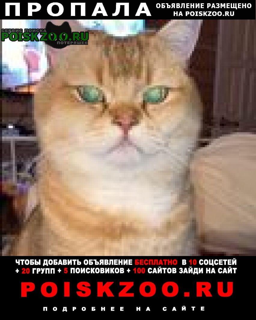 Пропала кошка Раменское