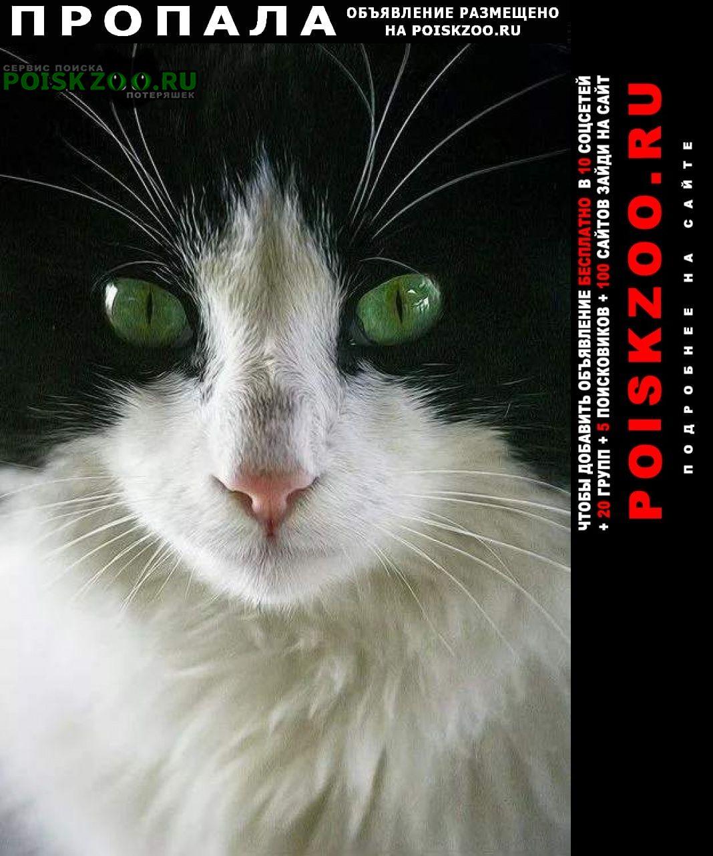 Пропала кошка черно белая Черкесск Карачаево-Черкесская Республика