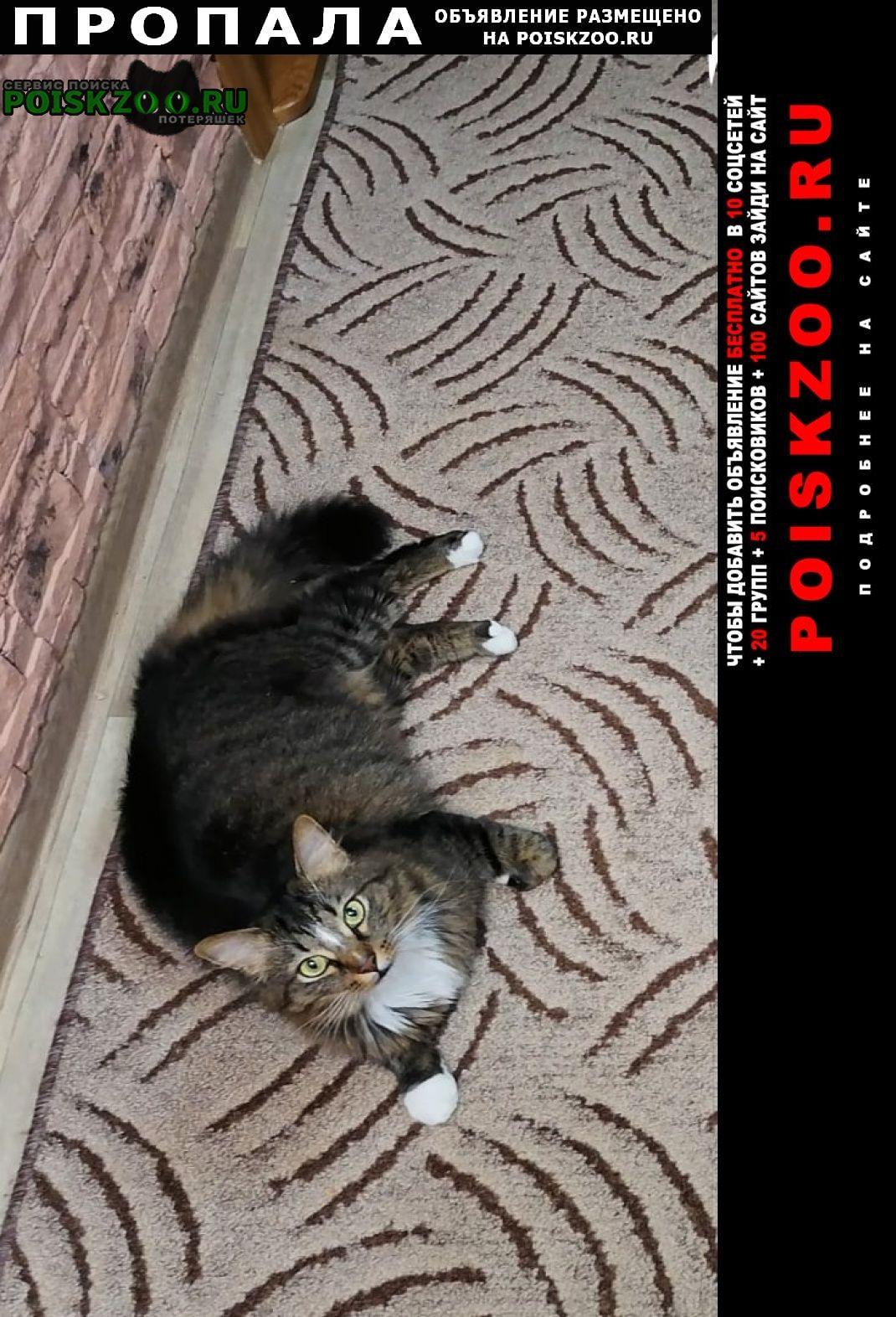 Пропало домашнее животное кот пушок Кострома