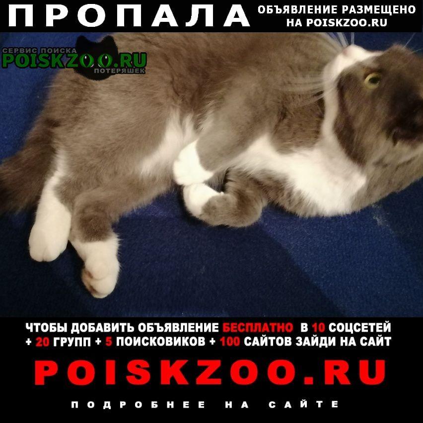 Пропала кошка Оренбург