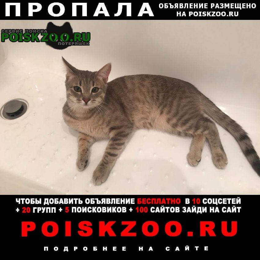 Пропал кот Рязань
