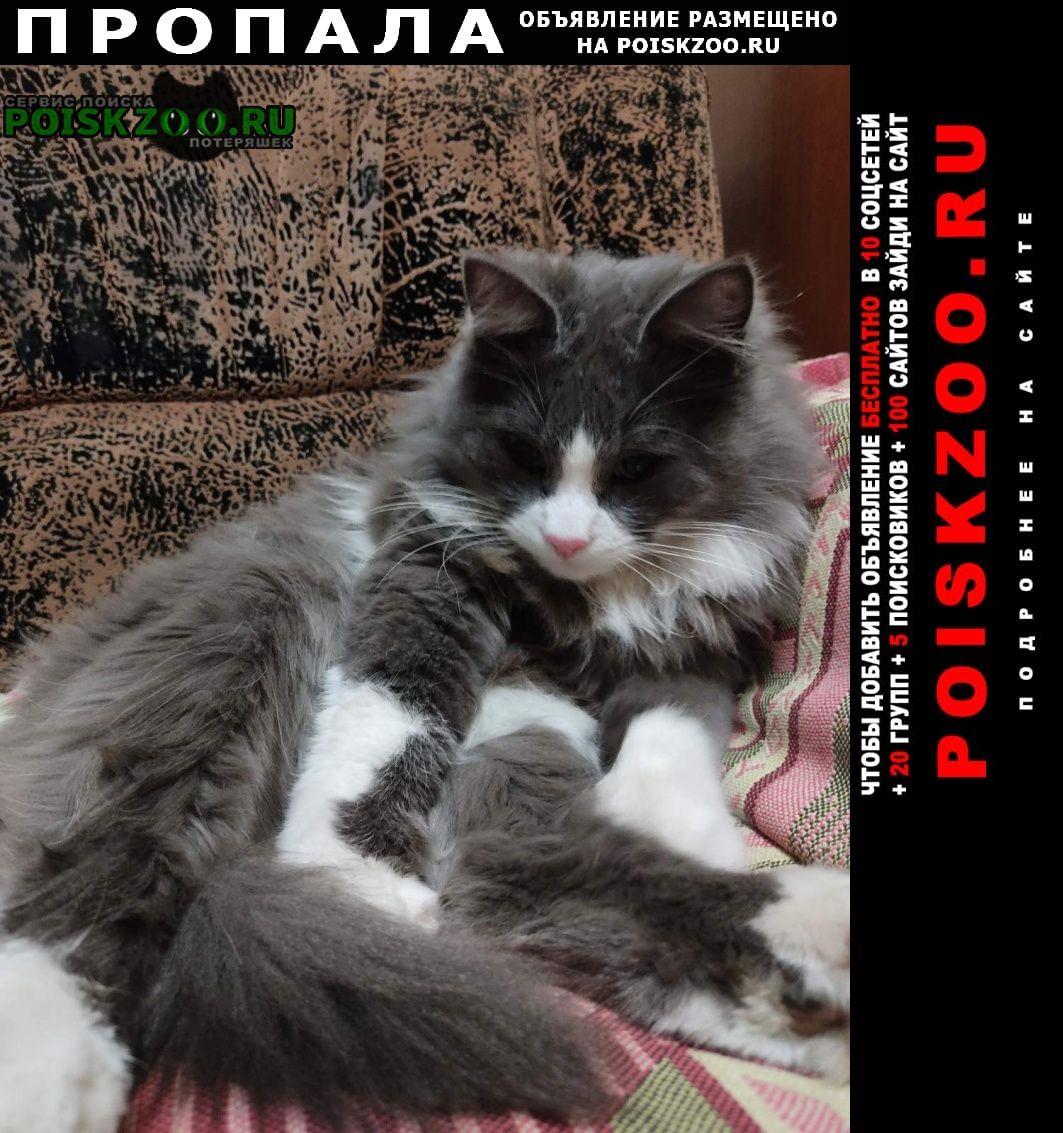 Пропала кошка кот Севастополь