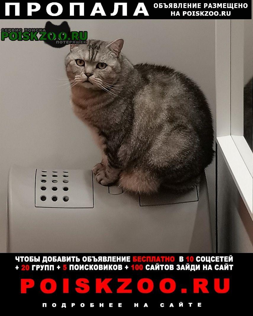 Верея Пропала кошка