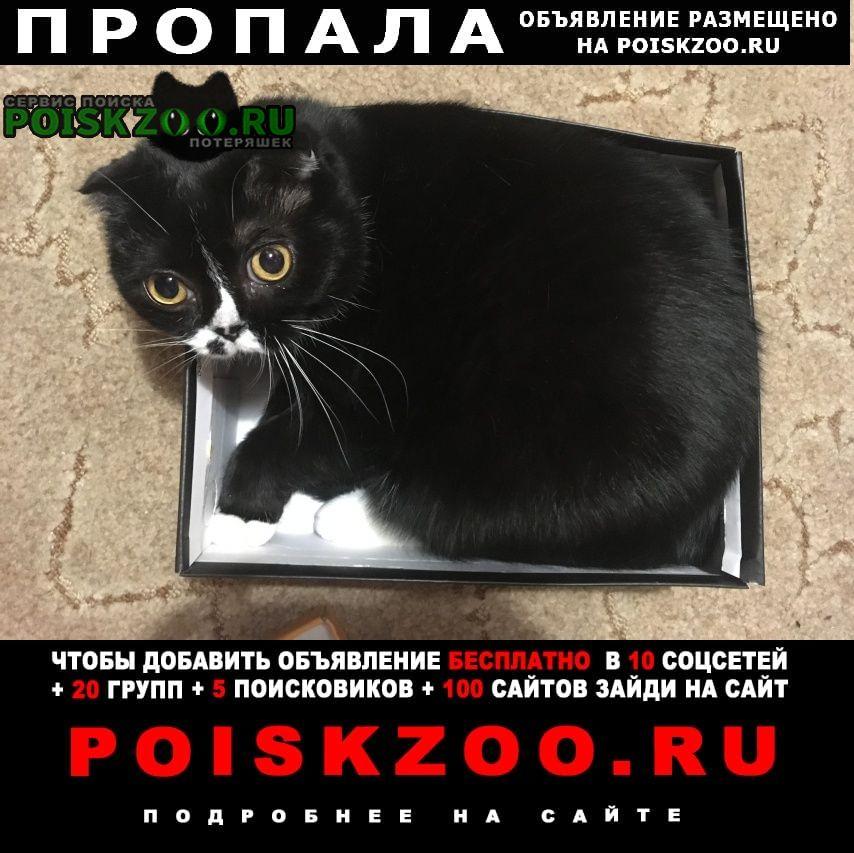 Калуга Пропала кошка кот в районе ул.генерала попова
