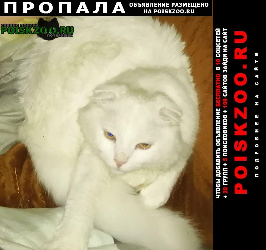 Пропала кошка помогите найти Нарофоминск