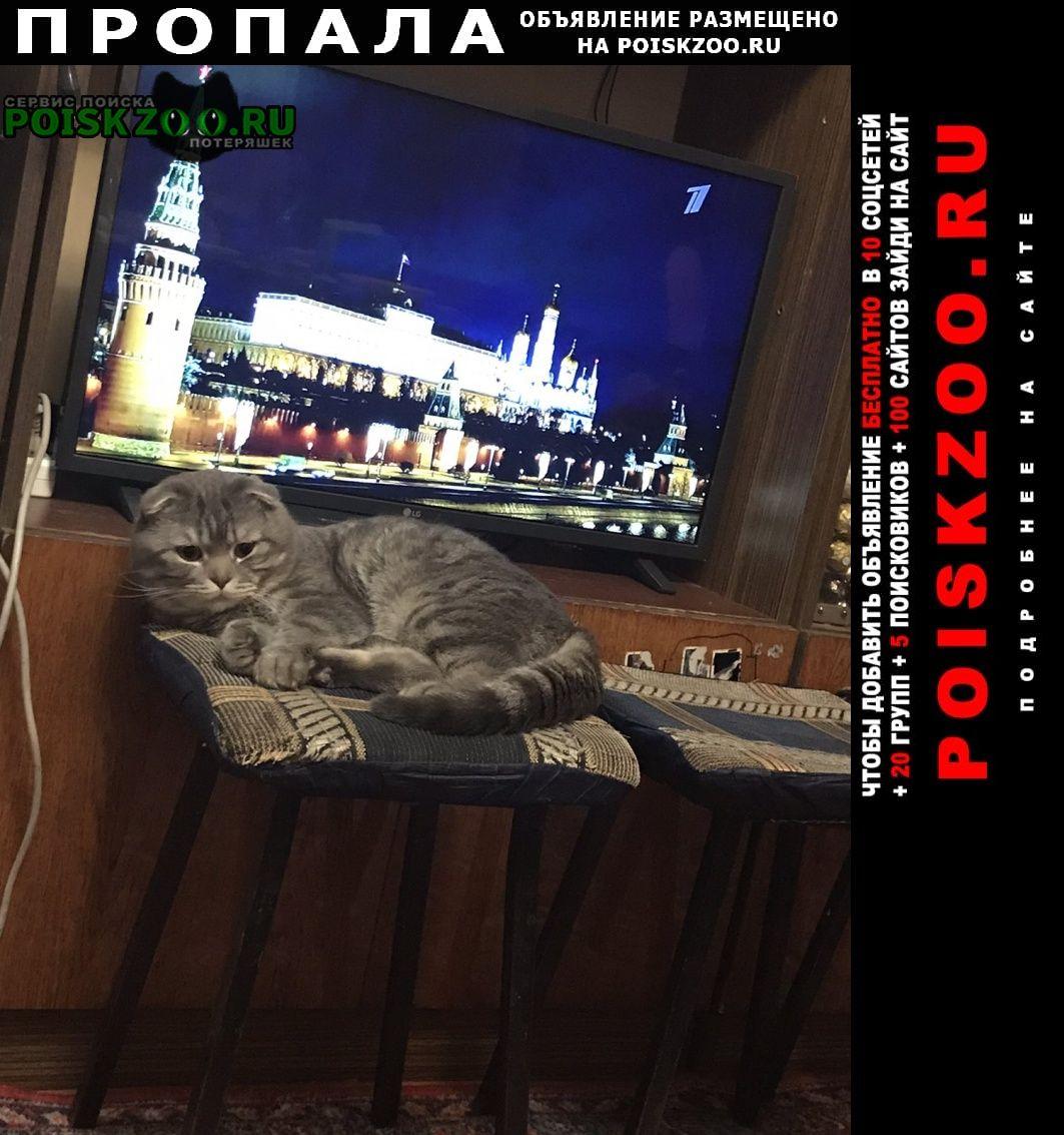 Пропал кот Белгород