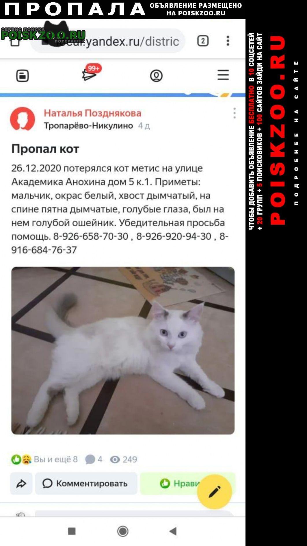Пропала кошка кот..г.ул.акад.анохина Москва