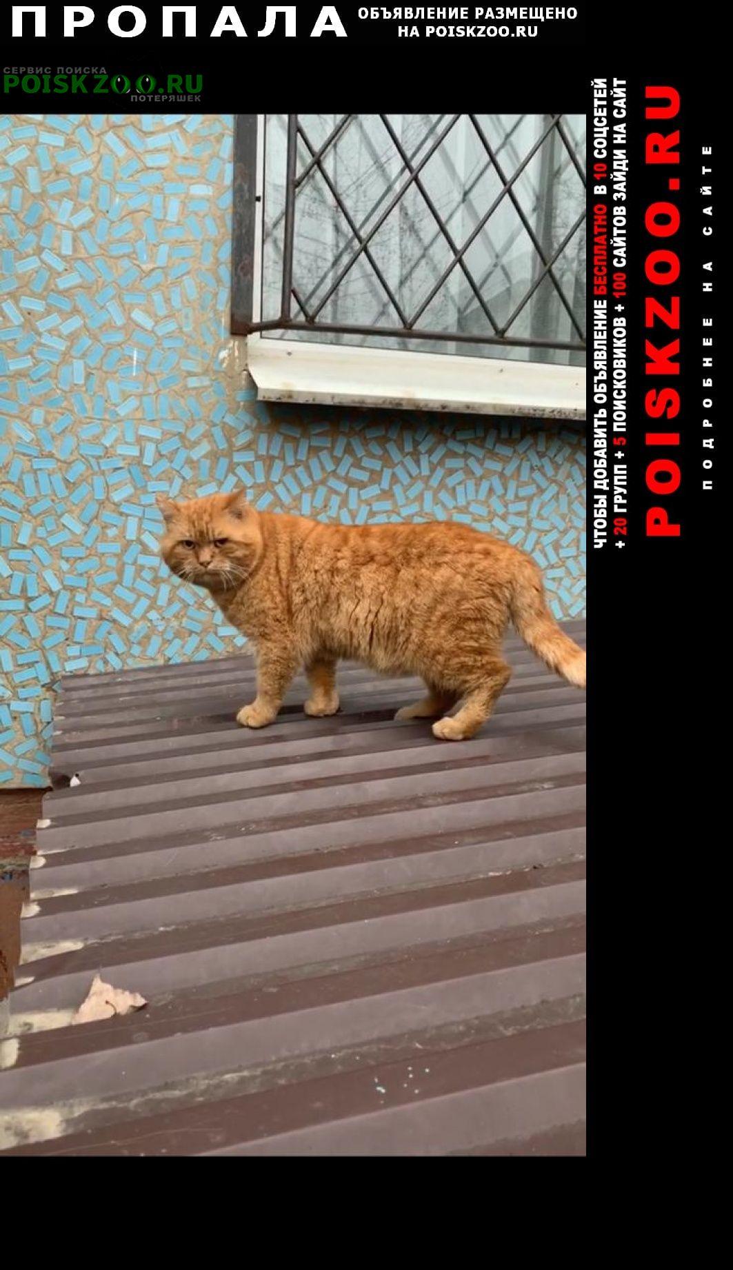 Пропала кошка помогите найти кота Армавир