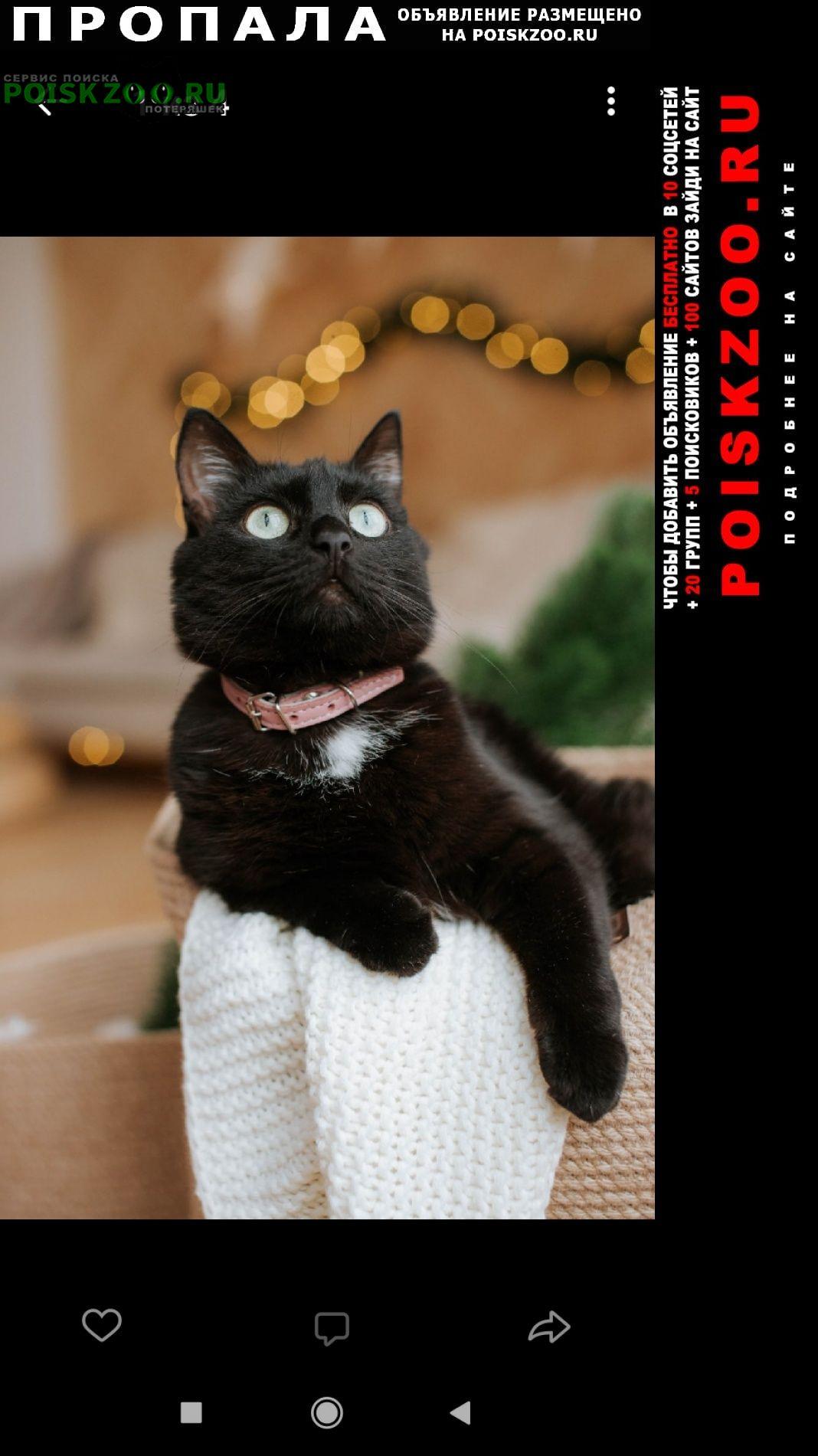 Пенза Пропала кошка вознаграждение 10000