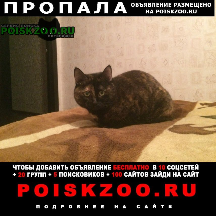 Йошкар-Ола Пропала кошка