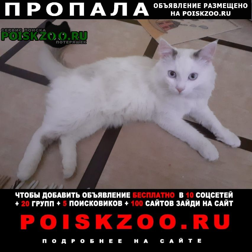 Москва Пропала кошка кот. академии. анохина5