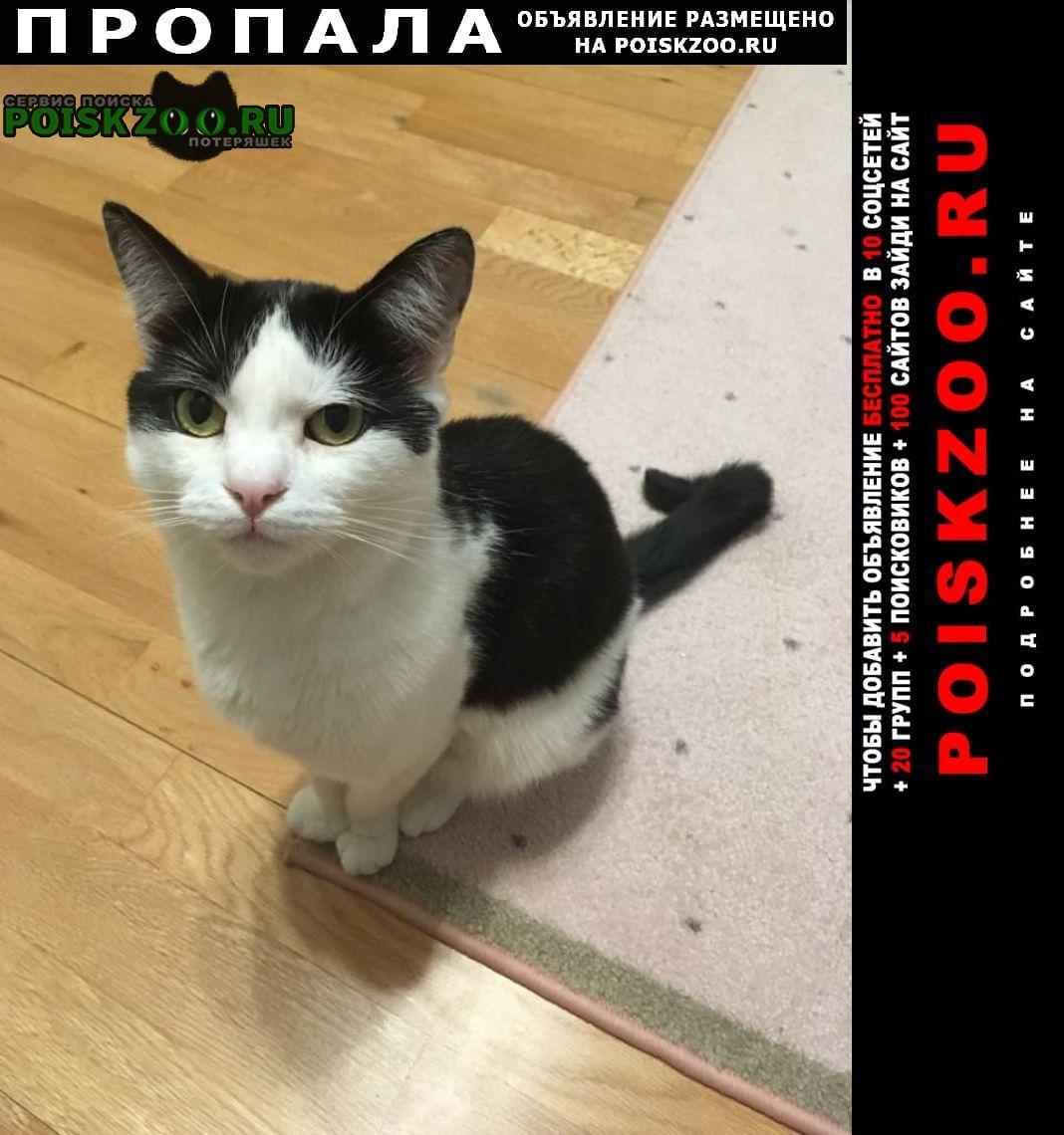 Одинцово Пропала кошка - кот 06 января 2021 в пос.власиха мо
