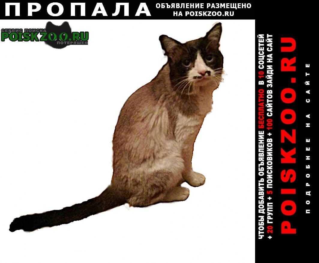 Пропал кот Чебоксары