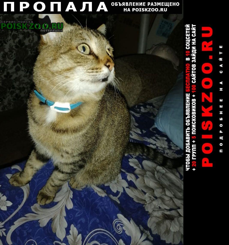 Пропала кошка Алексеевское