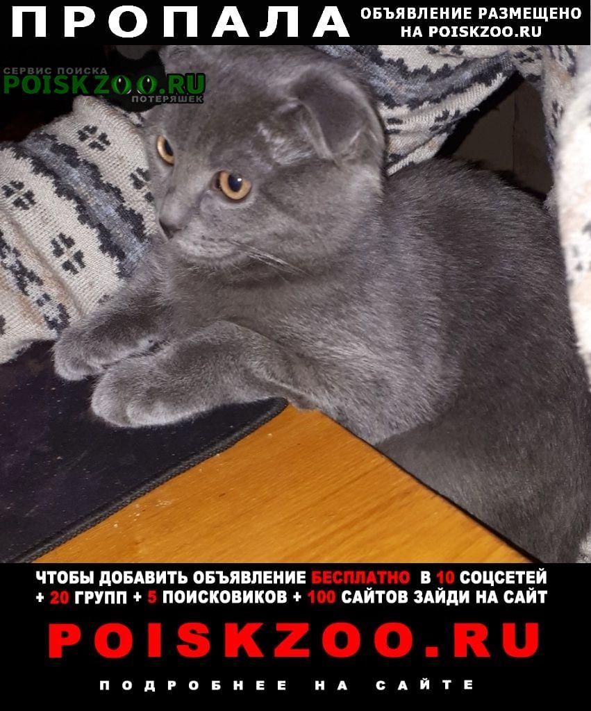 Пропал котёнок Новочеркасск