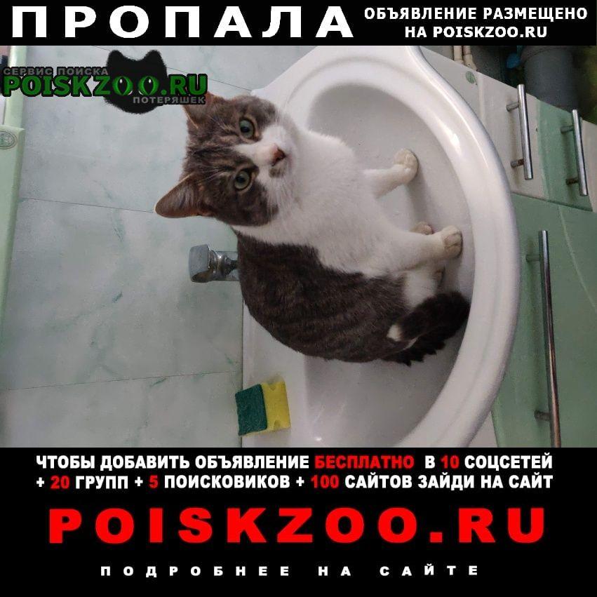 Пропала кошка кот Грязи