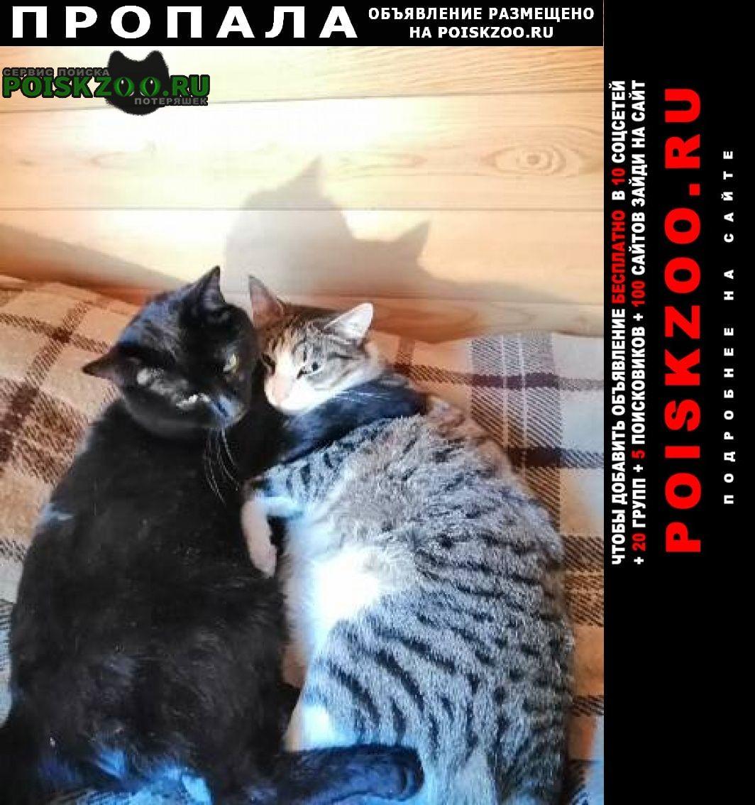 Красноярск Пропала кошка 2 кота