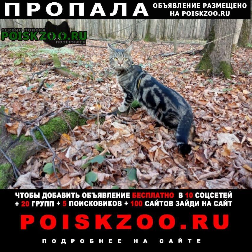 Пропала кошка кот даниловский донской р-он Москва