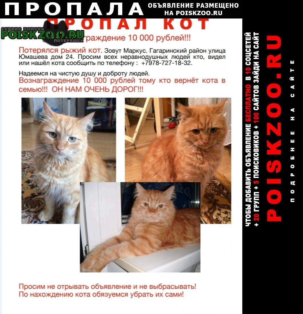 Пропала кошка рыжий кот Севастополь
