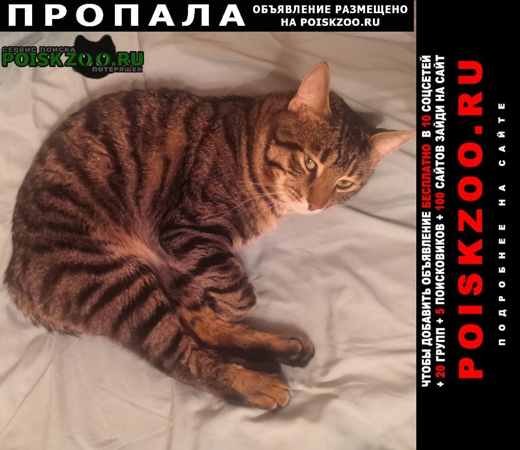 Пропала кошка кот Всеволожск