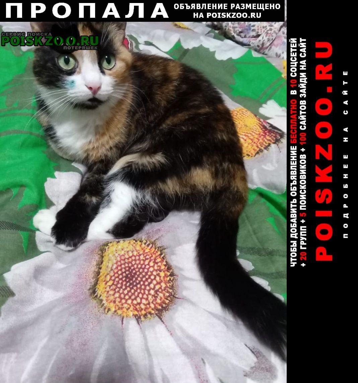 Пропала кошка трехцветная# спб Санкт-Петербург