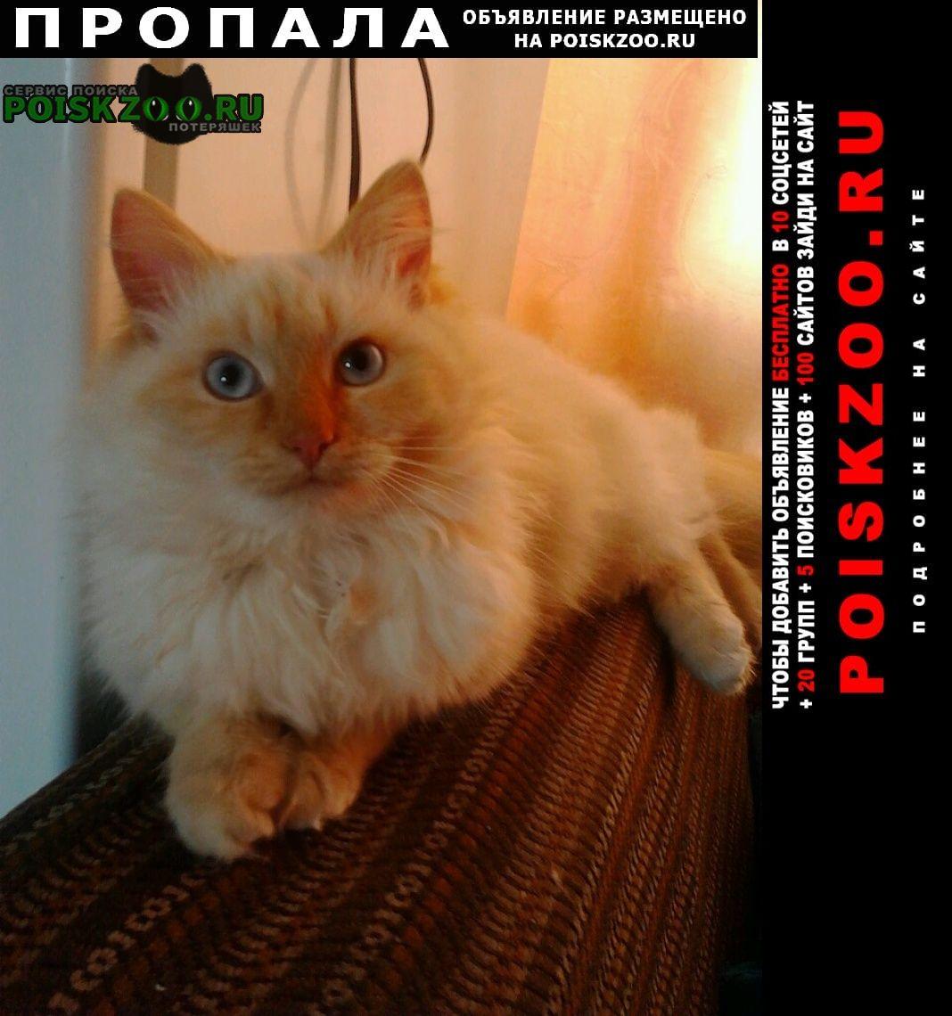 Пропала кошка кот Семилуки