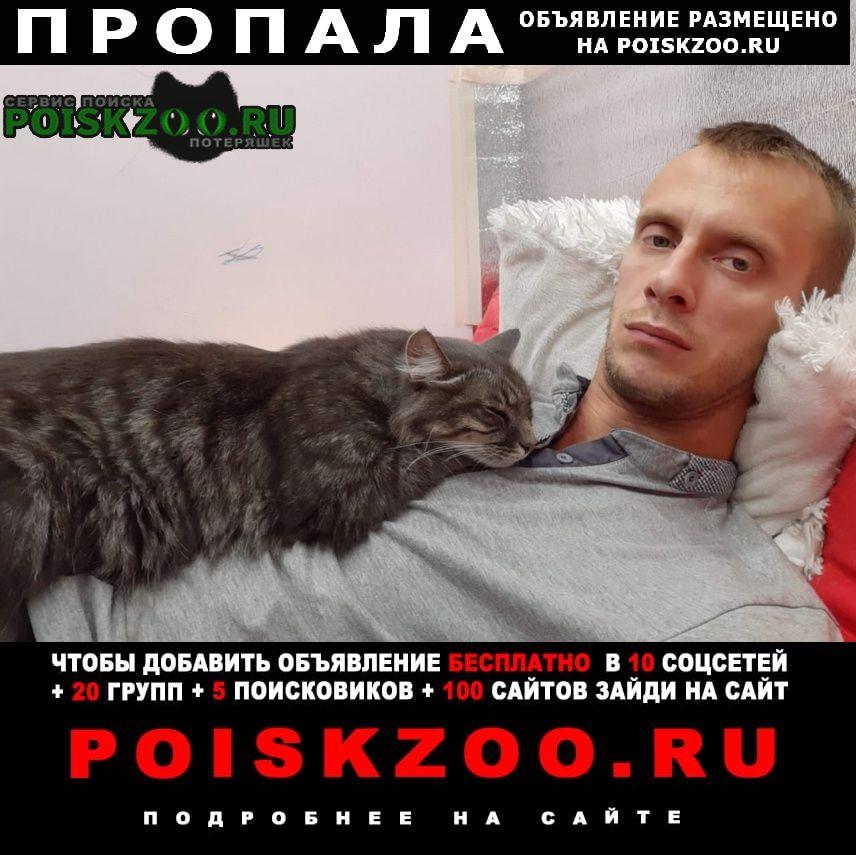 Пропала кошка Заокский