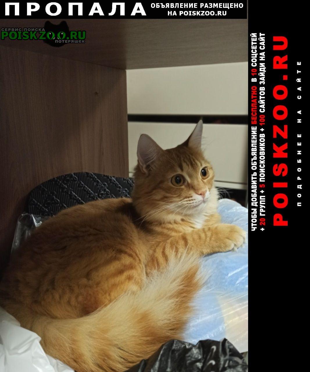 Пропала кошка очень просим вернуть ребёнок страдает Москва