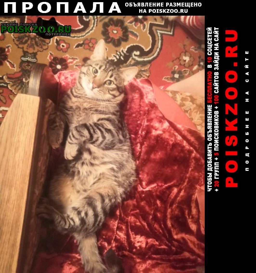 Пропала кошка серо черный кот Санкт-Петербург