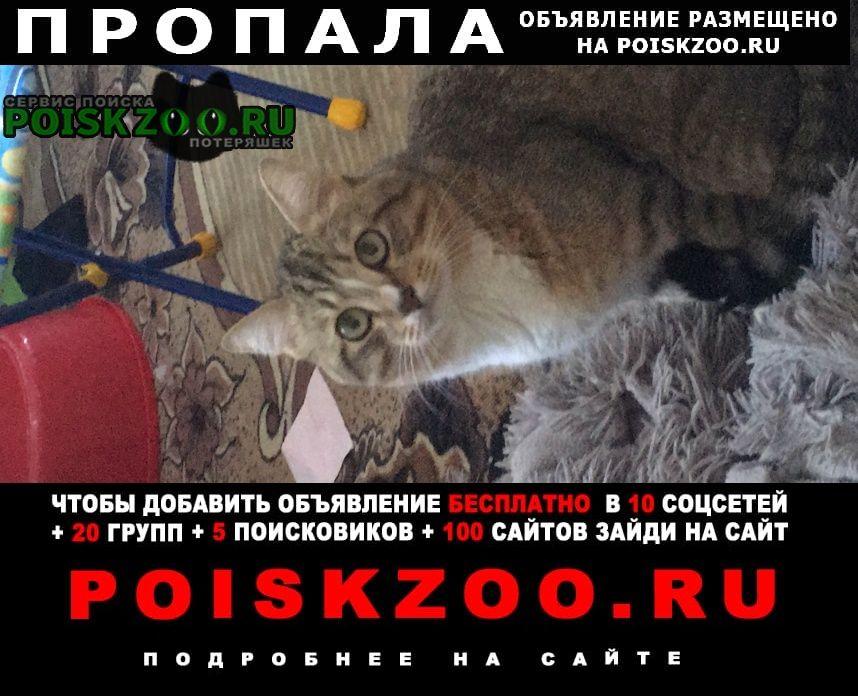 Пропала кошка кот в е в военном городк Славгород