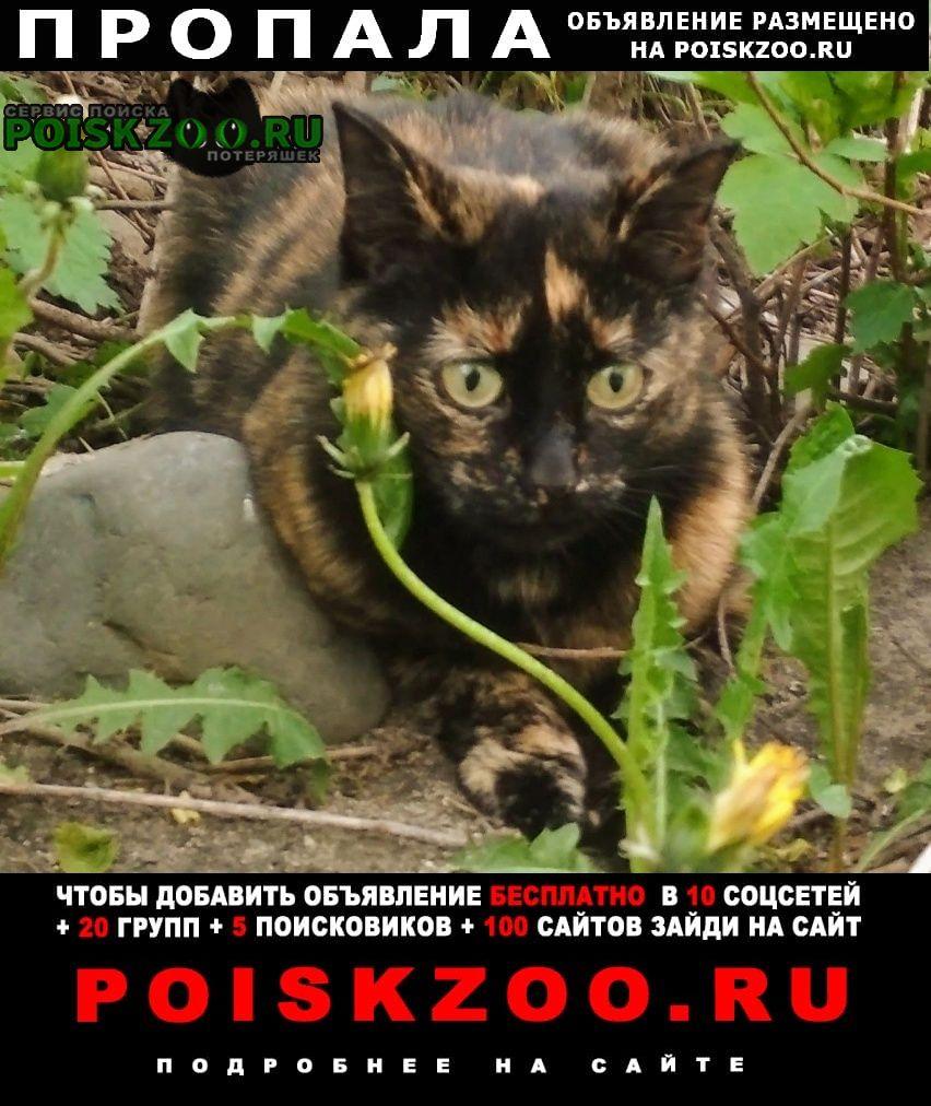 Пропала кошка ищу кошечку вознаграждение гарантируется Петрозаводск