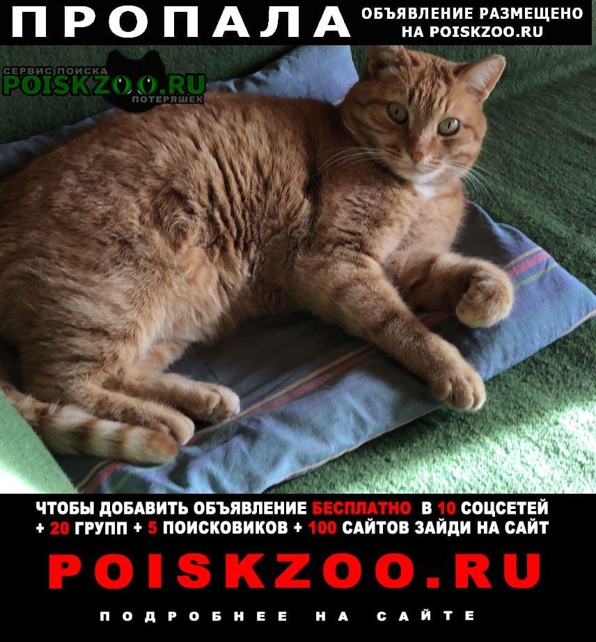 Пропала кошка рыжий кот Звенигород