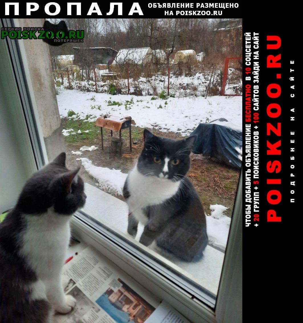 Пропала кошка котик тоша Истра