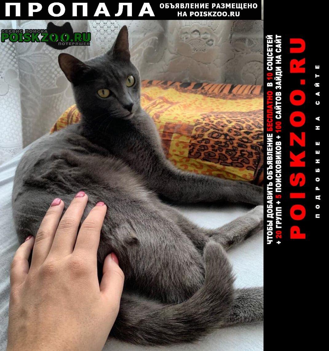 Пропала кошка кот. Новокузнецк