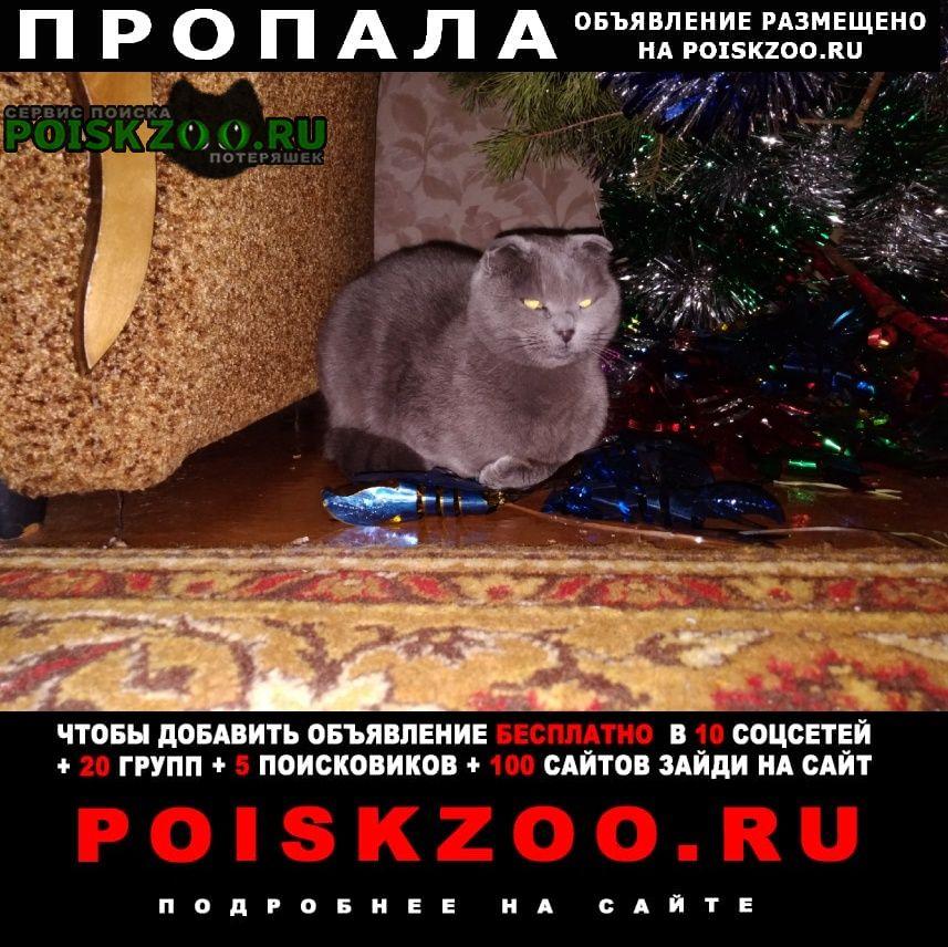 Пропала кошка вислоухая Петровск