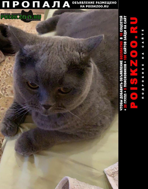 Пропала кошка кот в тишково Пушкино