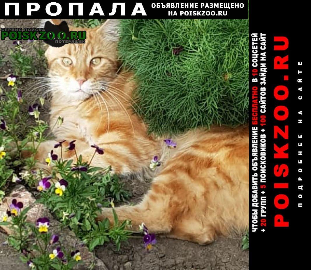 Краснодар Пропала кошка 18января кот