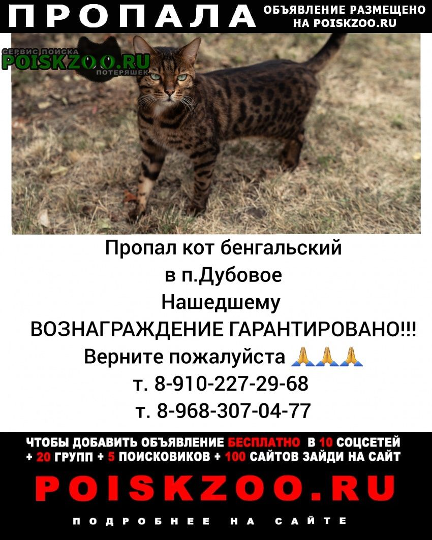 Пропала кошка кот бенгальский Белгород
