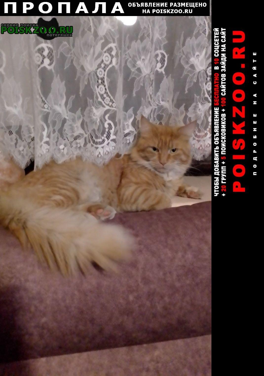 Пропала кошка кот Королев