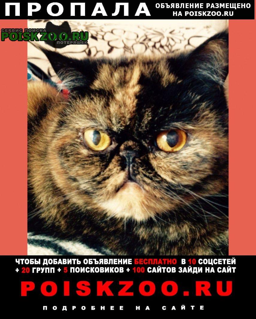 Пропала кошка пожалуйста помогите найти беглянку. Нижний Новгород