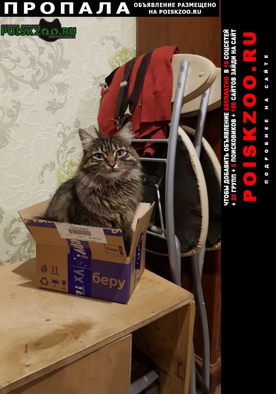 Пропала кошка Железнодорожный (Московск.)