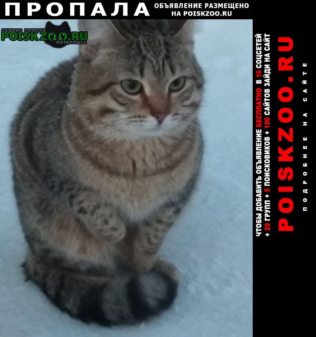 Пропала кошка помогите найти Салехард Ямало-Ненецкий АО